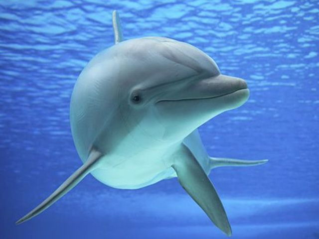 Unduh 440 Kumpulan Gambar Kartun Ikan Lumba2 HD Terbaru