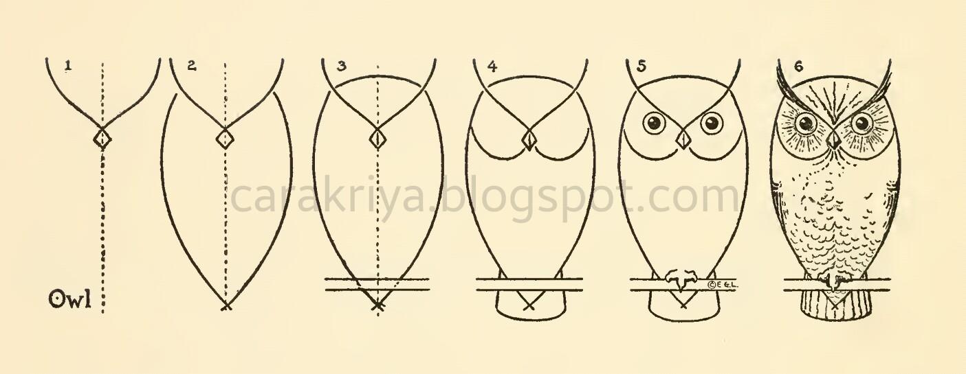 37 Free Download Info Cara Menggambar Burung Hantu Dengan Mudah