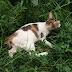 Mimi kucing cantik tapi cacingan