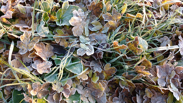 Frosty autumn morning in Norfolk countryside