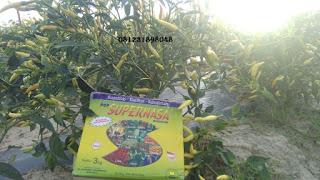 AGEN NASA - JUAL PRODUK NASA DI PROVINSI BANGKA BELITUNG TELP. 081231898048