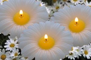 http://www.candlefactorystore.com/daisy-floating-flower-candle-3-inch/
