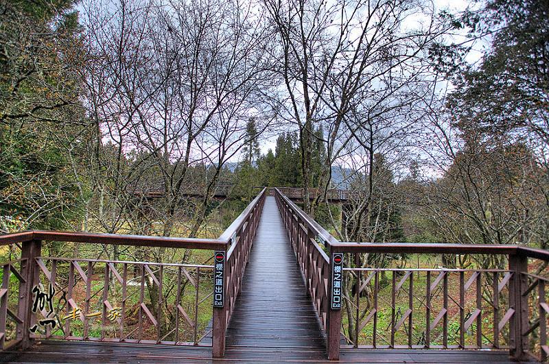沼平車站 沼平公園櫻花季 嘉義阿里山國家森林遊樂區景點 阿里山櫻花季