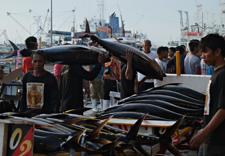 Tuna Everyday at General Santos City Fish Port