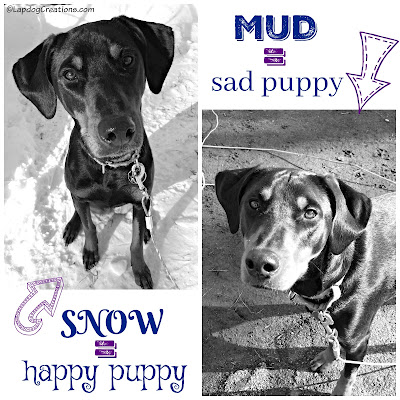 doberman mix rescue dog in snow and mud