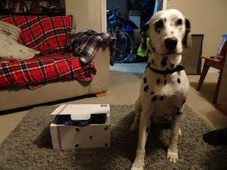 dalmation with milomails
