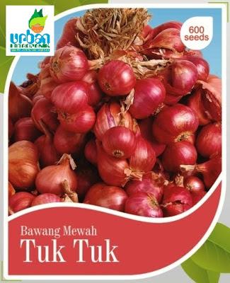 cara menanam biji bawang merah