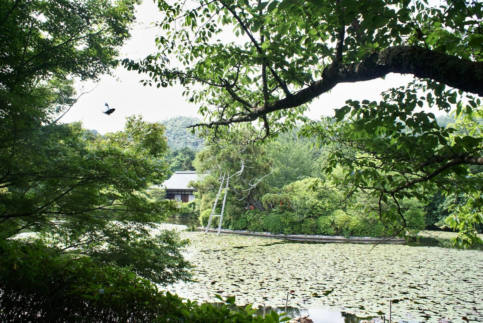 ryoan ji buddhist temple kyoto kansai japan asia
