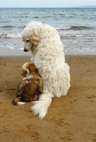 Cute White Dog and his friend  on Beach