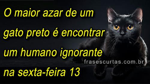 frases sobre azar e gato preto