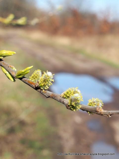 nadwiślańskie łęgi , wiosna , las łęgowy , łęgi , nad rzeką , nad wisłą , przyroda , wiosenna wycieczka , wędrowanie ,