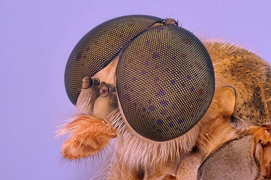 2016 Nikon Macro Photo Contest Winners Show The World Like You've Never Seen Before - Robber Fly