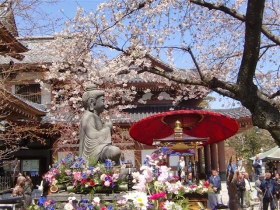 鎌倉:長谷寺花まつり