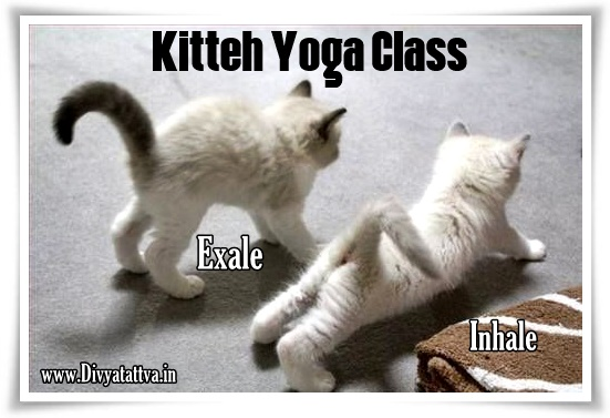 Meditaiton and Yoga funny pictures, yoga jokes with photos, spiritual humor