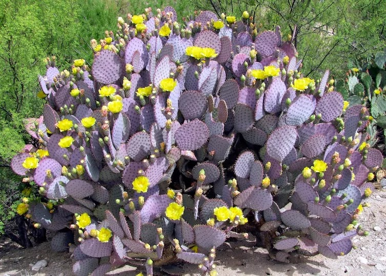 13 Pictures That Prove Mother Nature Is Messing With Us - Purple Cactus