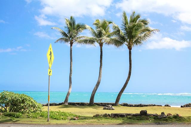hawaii,oahu,east coast,sunrisemakeshawaii,lifestyle,la plage, trois cocotiers,SUNday
