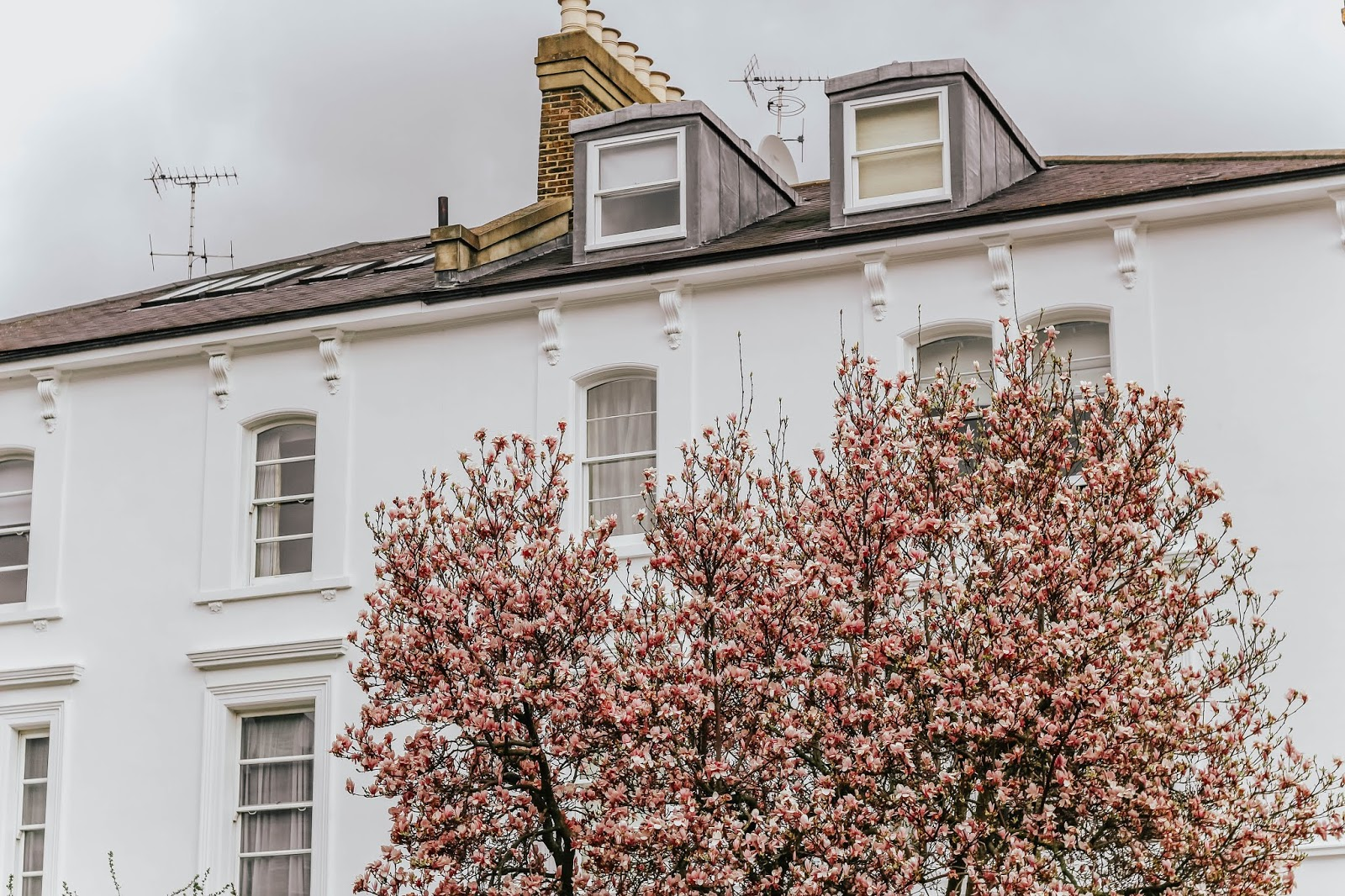 London pink blossom trees 2019 Spring