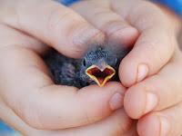Gara-gara Burung dan Semut, Rasulullah Tegur Para Sahabat