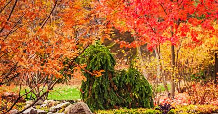 7 Ways to bring the beauty of fall to your Boise, Nampa, Meridian, and Eagle, Idaho landscape