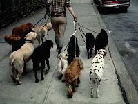 portare a spasso il cane