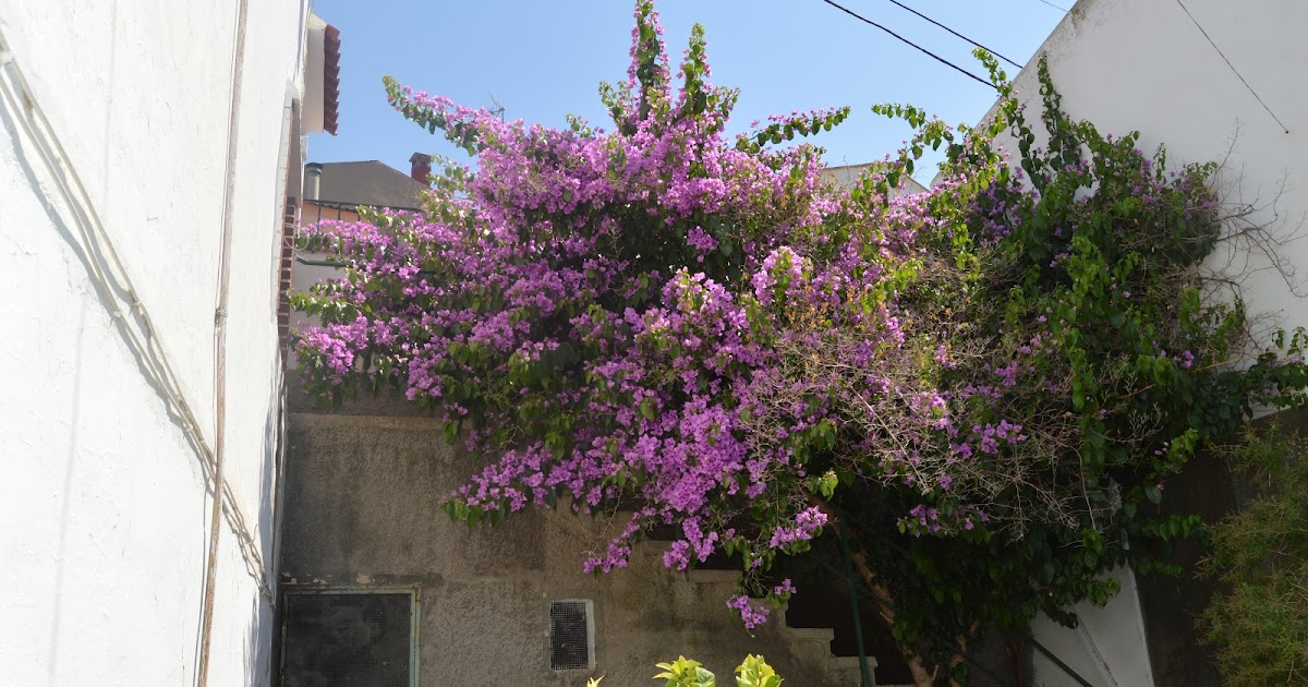 Eshijar una ma ana en el jardin de maria jose turon en for Calle el jardin
