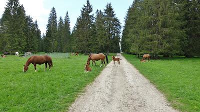 Pferde auf einem Waldweg