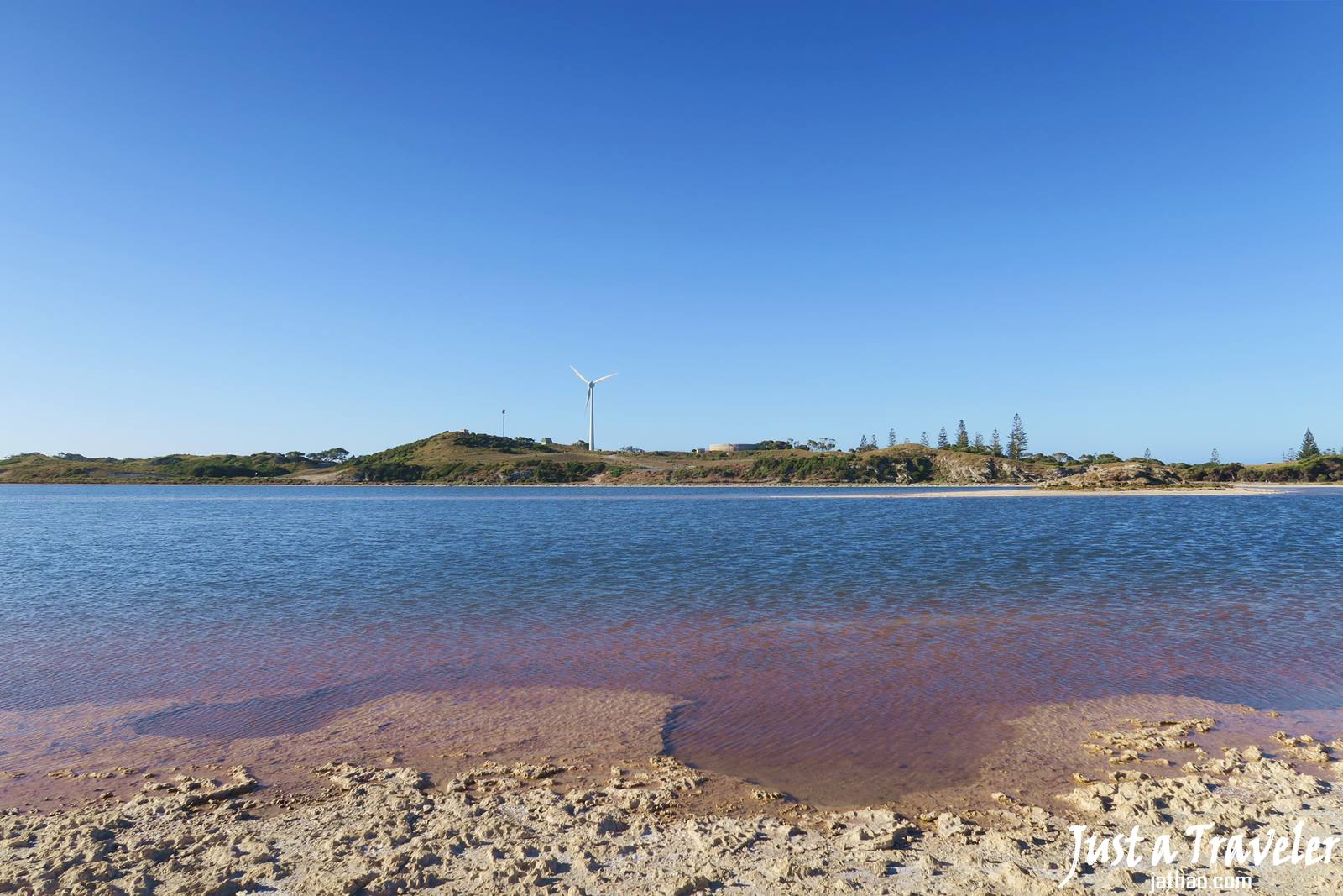 澳洲-西澳-伯斯-景點-羅特尼斯島-Rottnest Island-粉紅湖-推薦-自由行-交通-旅遊-遊記-攻略-行程-一日遊-二日遊-必玩-必遊-Perth