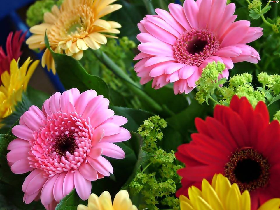 Here it is some beautiful flowers