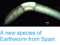 http://sciencythoughts.blogspot.co.uk/2014/04/a-new-species-of-earthworm-from-spain.html