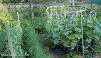 огурцы в мешке, выращивание огурцов, урожайные огурцы,die Gurken in der Tasche, ist der Anbau von Gurken, Ernte Gurken, Посмотреть перевод вGoogleBing,cucumbers in the bag, growing cucumbers, harvest cucumbers,