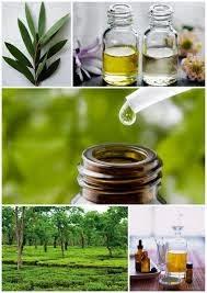 tea tree oil for healthy growth in hair