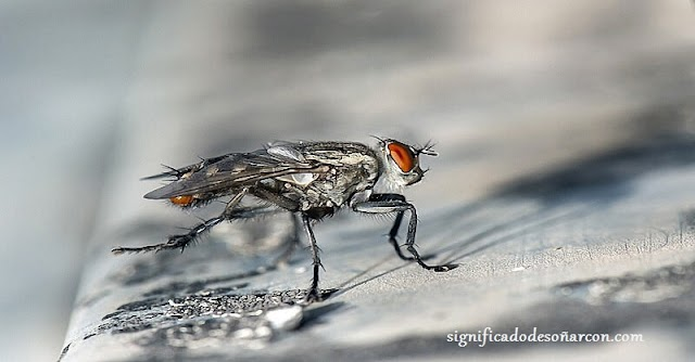 Significado de soñar con moscas