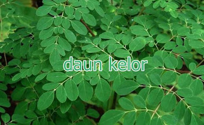 manfaat daun kelor