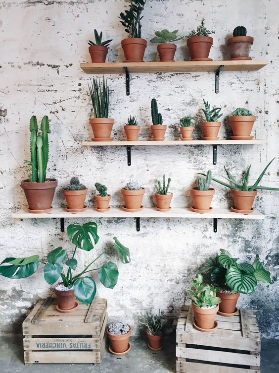 Succulents in Terracotta Pots on Shelves