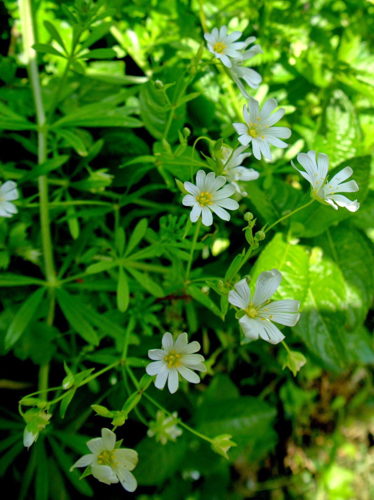 Peter Lovetts Ramblings Four Beautiful White Flowers In A