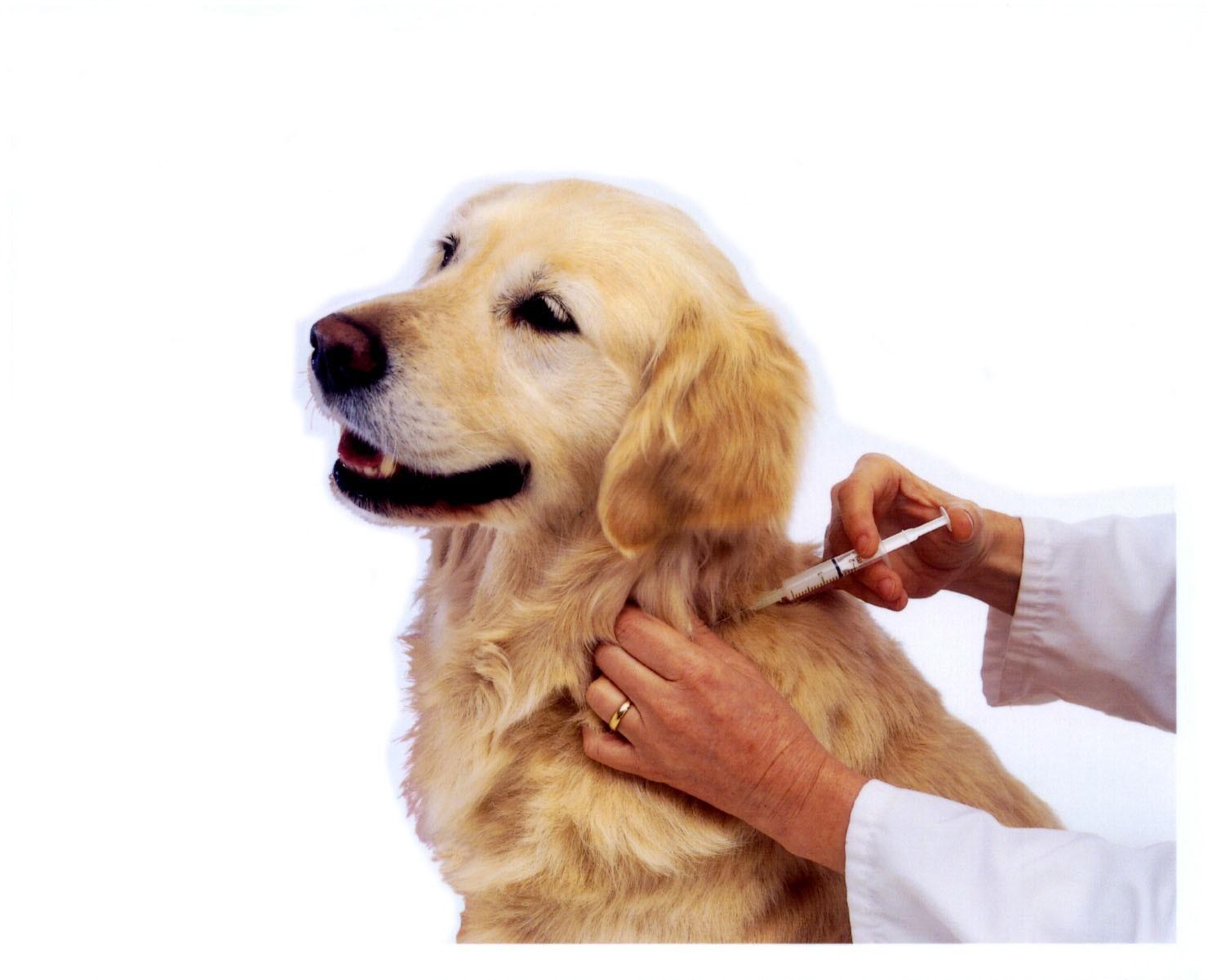 pet shops  Vacinas para Cães