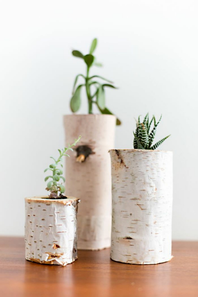 Pot Batang Pohon Bekas