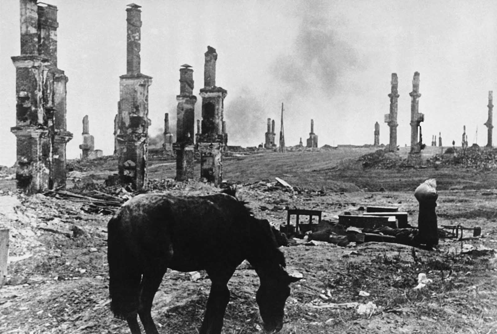 A scene of devastation as an abandoned horse stands among the ruins of Stalingrad in December of 1942.