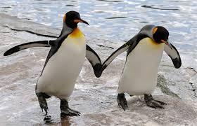 Belajar kesetiaan dari pinguin