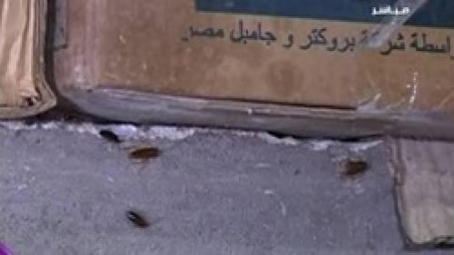 بالفيديو.. «صراصير» في مخزن سوبر ماركت شهير بجوار السلع الرمضانية