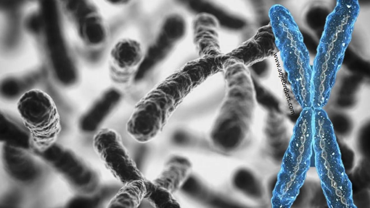 a vállízület gennyes artrózisa az ízületek gyulladásának kezelése