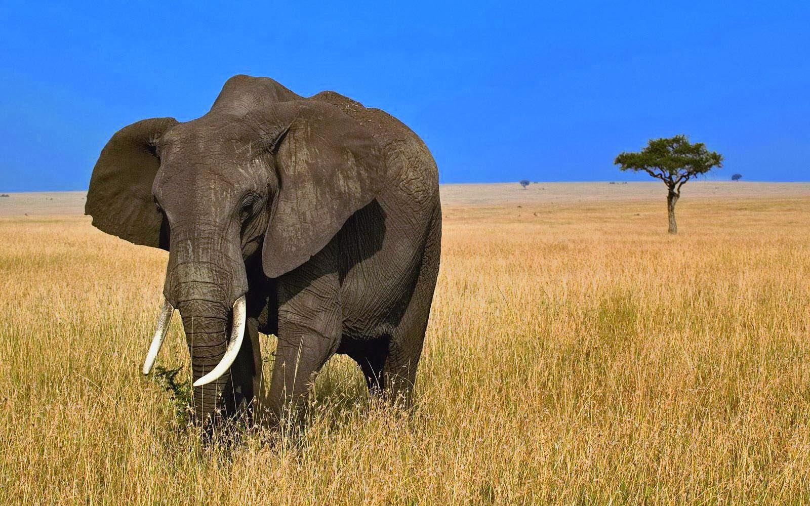 Cute Alien Iphone Wallpaper African Elephants Hd Wallpapers Free Hd Wallpapers