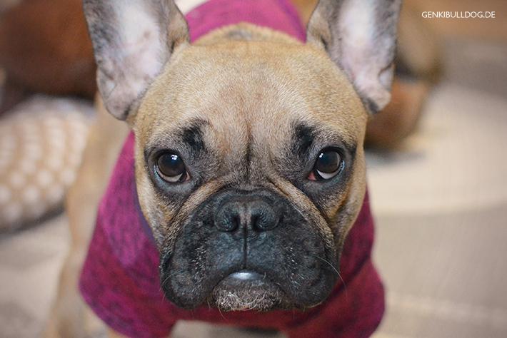 Hautallergietest / Intrakutantest beim Hund