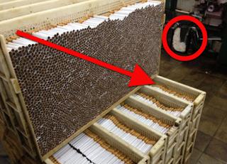 Ngerinya !!! Kesaksian Karyawan Pabrik Rokok Ini Bisa Bikin Kamu Berhenti Merokok Saat Ini Juga!