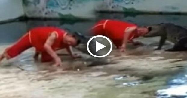 Video Kepala Dibaham Buaya Ketika Membuat Aksi Berani Mati