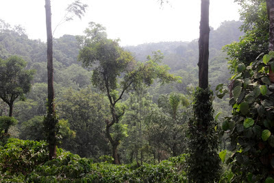 Madikeri région de Coorg karnataka inde