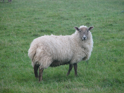 Wooly-Sheep-Sample-Image-Canon