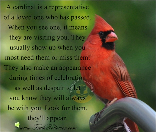 A Cardinal Is A Representative Of A Loved One