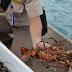 Sumber Lobster dan Sindikat