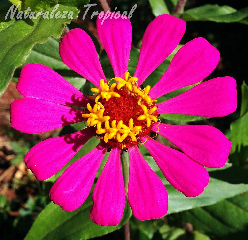 naturaleza tropical cultiva a gran escala 8 plantas